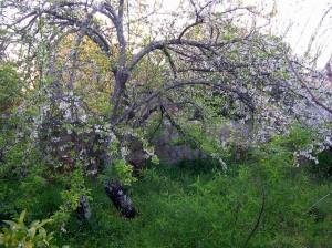 garden marie jeanne